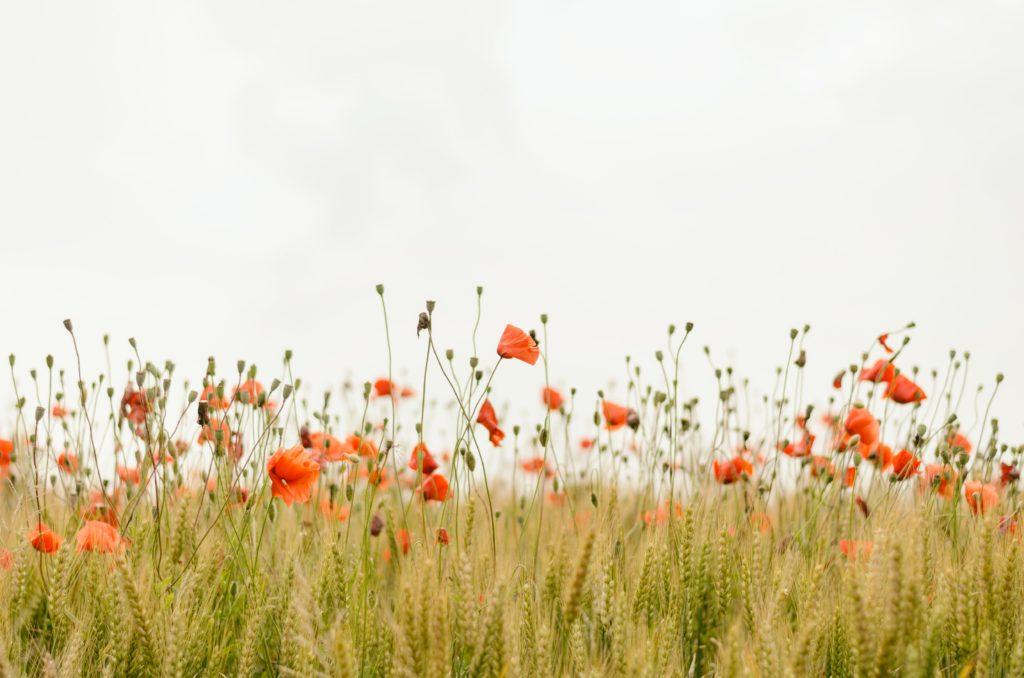 nature fleurs meditation