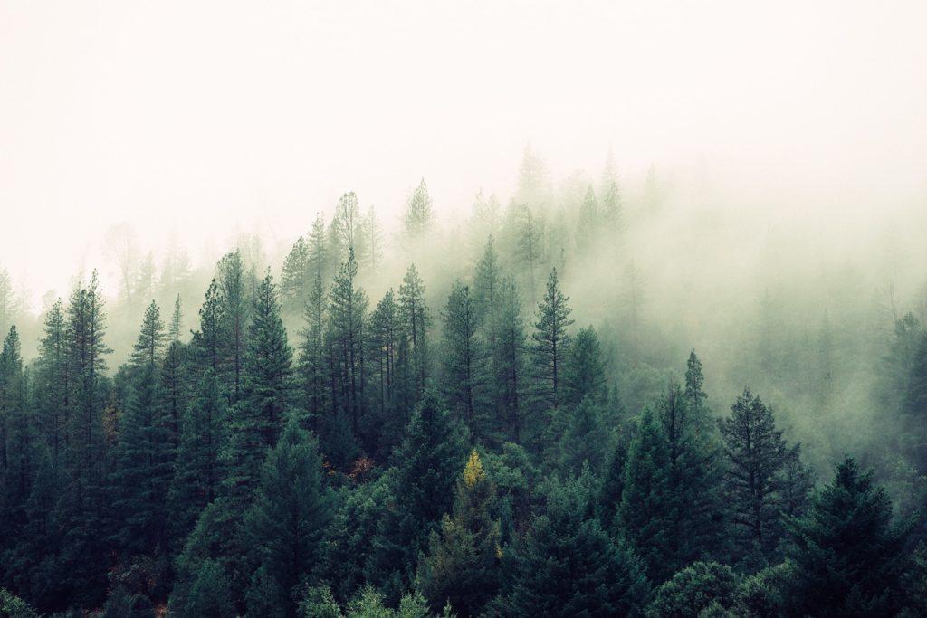nature foret meditation